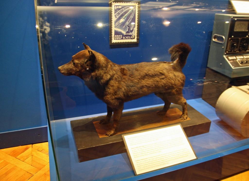 IMG_6510-чучело Чернушки - собаки летавшей в космос
